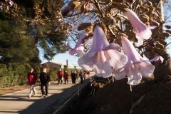 Alcoletge i Montoliu de Lleida-14