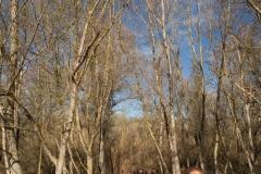 Alcoletge i Montoliu de Lleida-39