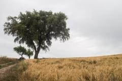 Ruta de l'aigua Tarroja-IMG_0096