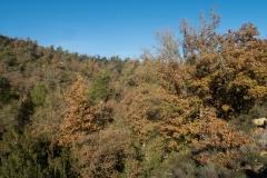 Mas Farell-Camí dels Rossells-1141
