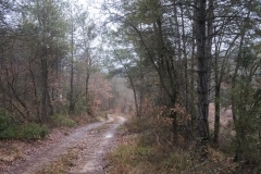 Camí dels Rossells-Ogern-3106