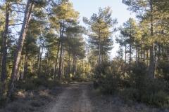 Ogern-Serra-seca-4350