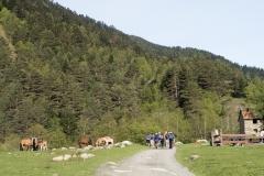 Caminada a Montgarri-9186