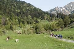 Caminada a Montgarri-9200
