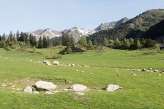 Caminada a Montgarri-9208