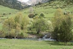 Caminada a Montgarri-9230
