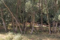 Llo-Puigcerdà-3901