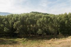 Llo-Puigcerdà-3902