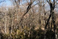 La Via Romana de la Vall d´Ager-7759