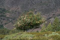 Pic de Tudela-4059