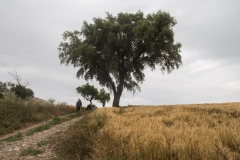 Ruta de l'aigua Tarroja-IMG_0095