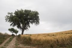 Ruta de l'aigua Tarroja-IMG_0097