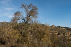 Mas Farell-Camí dels Rossells-1140