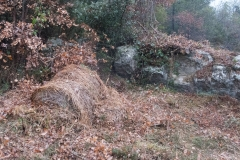 Camí dels Rossells-Ogern-3105
