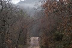 Camí dels Rossells-Ogern-3107