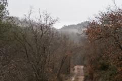 Camí dels Rossells-Ogern-3108