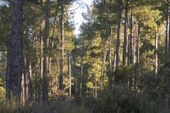 Ogern-Serra-seca-4356