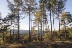 Ogern-Serra-seca-4357