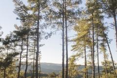 Ogern-Serra-seca-4358