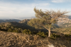 Serra-seca-a-Alinyà-5458