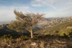 Serra-seca-a-Alinyà-5459