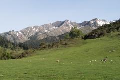 Caminada a Montgarri-9193