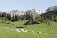 Caminada a Montgarri-9209