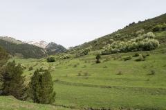 Caminada a Montgarri-9225