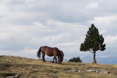 Pic de Tudela-4036